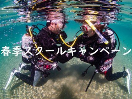【2020年限定】春のダイビングスクールキャンペーン