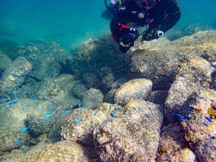活気と透明度が回復した9月最後の海