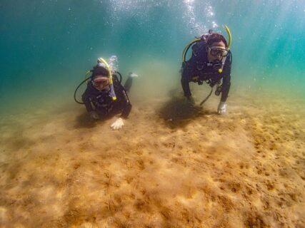自由に遊べる体験ダイビング